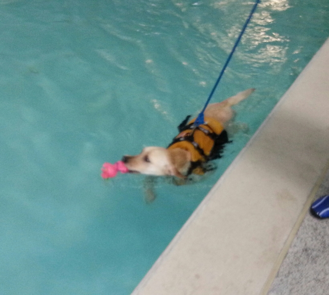 Libby swimming